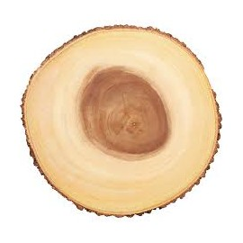 Base - tronco - expositor rustico diâmetro 21 cms alt. 2 cms